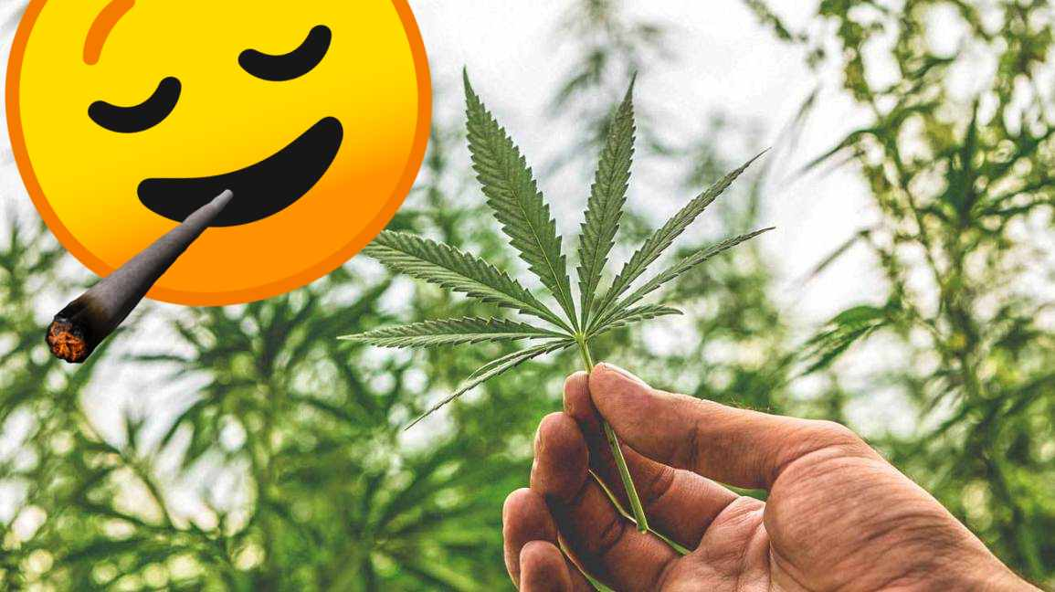 Read: 5 Things You Definitely Didn't Know About Marijuana 🍀